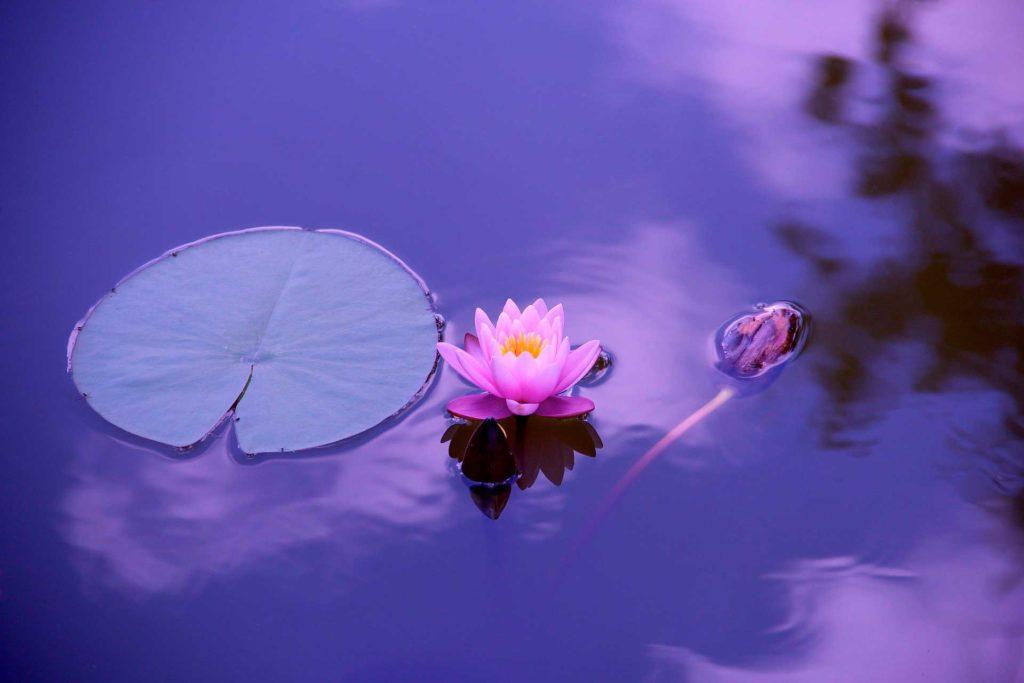 curso-de-meditacion-y-mindfulness